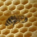 beeswax faq