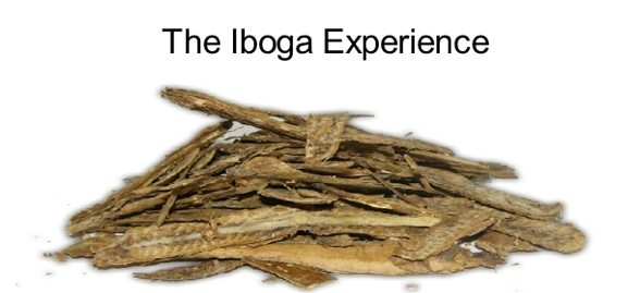 Iboga Experience – Transformation of the Self