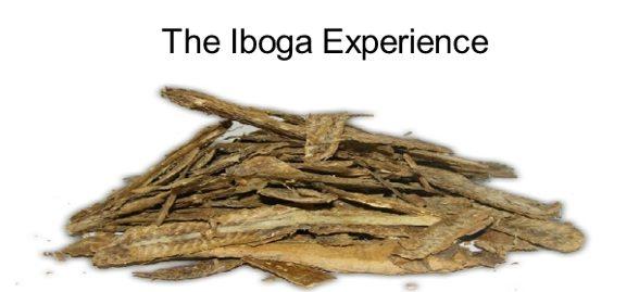 Iboga Experience